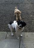 Freda's Pups