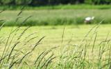 Oskarp stork i skarp miljö