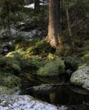 Vårvinter i skogen