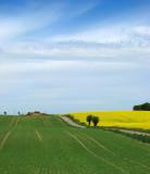 Skånelandskap i maj
