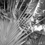 fronds in the wind
