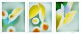polagram triptych