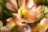flowers from a secret admirer