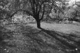 shadows in the orchard