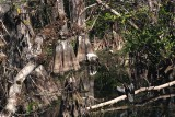 woodstork and anhinga
