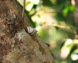 tree snail