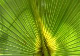 palm backlit