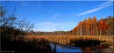 Sixty Road Swamp
