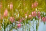 Impressionistic Reflections