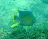 Fish & Marine Life