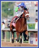 In Loving Memory of Barbaro