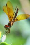 a Friendly Dragonfly