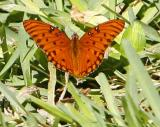 another great Butterfly