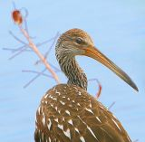 Mr. Limpkin checkin me out