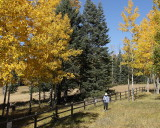(7356) Scouting for Aspen