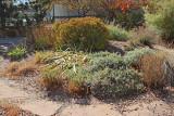Perennial Garden (1901)