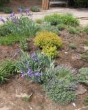 Perennial Garden [2009] (8796)