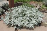 Silver Brocade Artemisia #774 (8770)