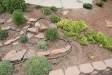 W Artemisia Garden (8810)