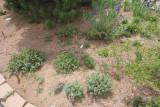 Wildflower Garden N (8814)