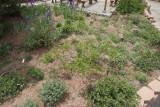 Wildflower Garden S (8816)