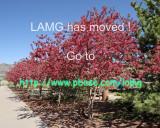 Los Alamos Master Gardener Demonstration Garden photos have MOVED