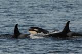 Orca Group (7395)