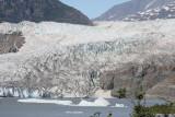 Mendenhall Glacier (8728)