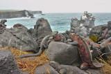 Day 7 -- Espanola Island, Galapagos, May 2010