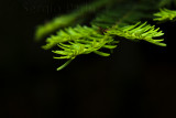 nuevas hojas