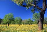 Almendral / Almond trees