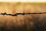 Western Fence.jpg