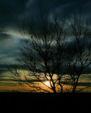 Peaceful Evening.jpg
