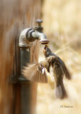 Just Thirsty.  Chinaberry Picnic Area