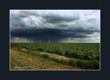 Wind and Rain.jpg