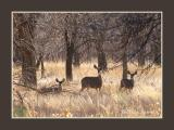 Gentle Deer