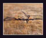A Bit Of Barbed Wire