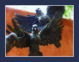 Bronze Doves 2.jpg