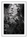 Ice on the Bark.jpg