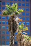 Palmtree and Skyscraper