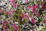6 February Desert flowers