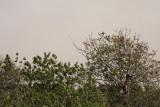 7 february Freaky dust storm