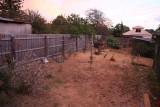 9 february A very dry back garden