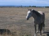 Appalachian Horse