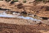 Water in the Boolcunda Creek