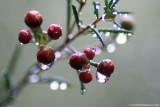 1 Raindrops