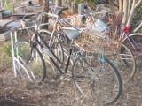Bush bycicle store
