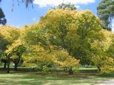 Autumn at Kings Domain park