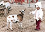 Kelly & goat 1982