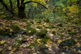 Moss  Rocks Near Fern Spring